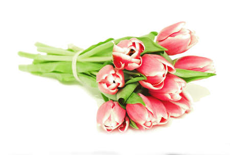 bunch of pink tulips on white background photo