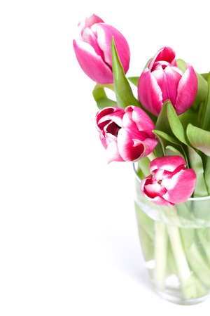 pink tulips and empty space for your text photo