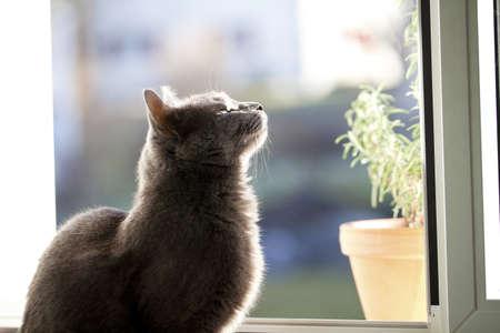 perceive: gatto si sta godendo sole di primavera al davanzale della finestra Archivio Fotografico