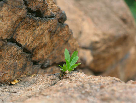 plant growing on rock photo