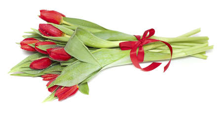 red tulips tied with a red ribbon isolated on white photo