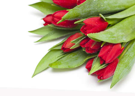 red tulips with droplets photo