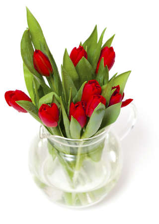 red tulips isolated on white photo
