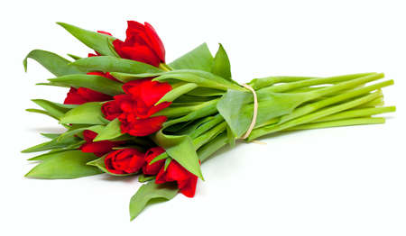 tied red tulips isolated on white photo