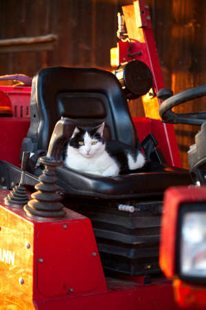 farm cat sitting in a tractor seat photo
