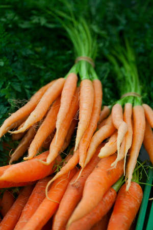 fresh carrots at farmers market photo
