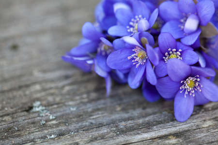 blue flowers: blue spring flowers on wooden table