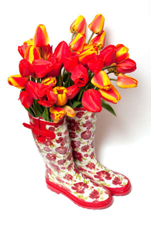 fresh tulips on beautiful rubber shoes isolated on white background photo