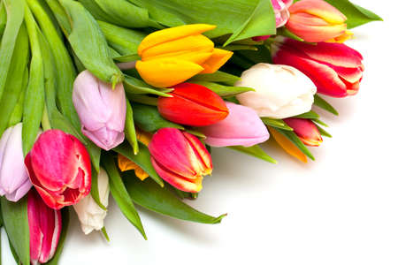 colorful tulips and empty space for your text photo