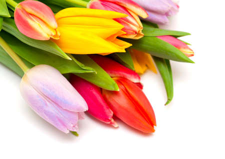 tulips Stock Photo - 14253259