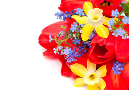 spring flowers Stock Photo - 14253086