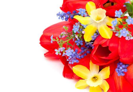 spring flowers Stock Photo - 14253086