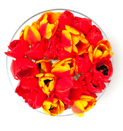 tulips in glass bowl photo