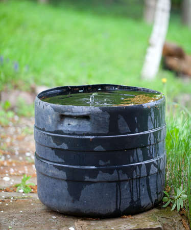 shower water: plastic container collecting rain water for plant watering