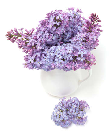 bouquet of lilac  isolated on white background photo