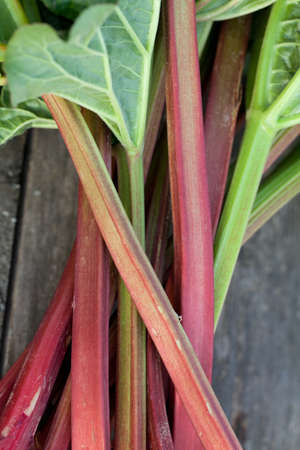 bunch of rhubarb on wooden table photo