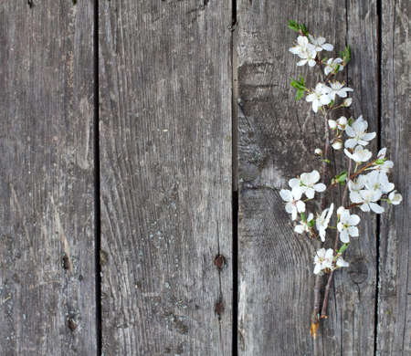 white blossom on wooden table photo