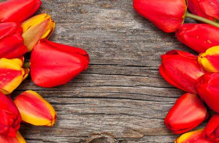 tulip frame photo