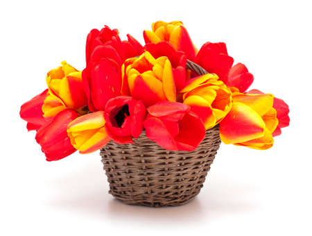 tulips in basket photo