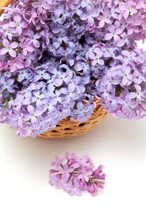 lilac flowers in basket photo