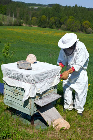 beekeeper works in his aplary photo