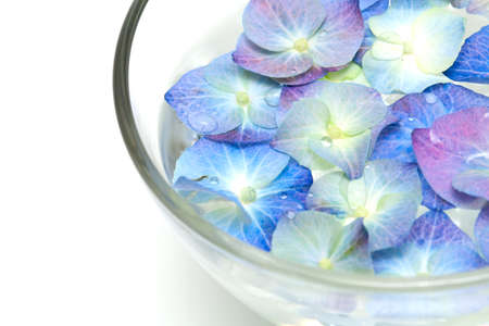 Blue Hydrangea in a glass bowl photo