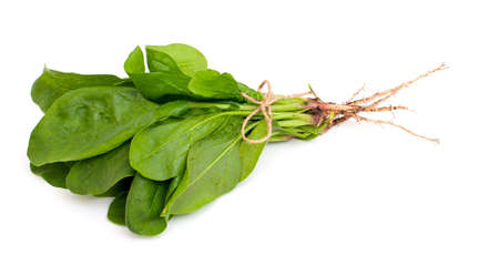 spinach isolated on white background photo
