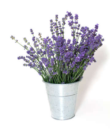 lavender in bucket isolated on white background photo