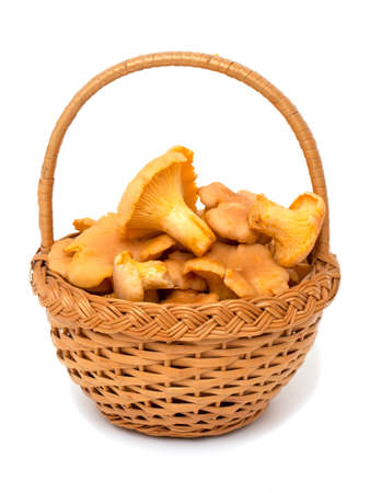 chanterelle: basket with chanterelle mushrooms Stock Photo