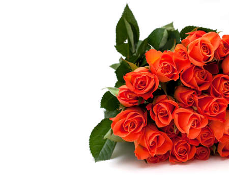 orange roses and empty space for your text photo
