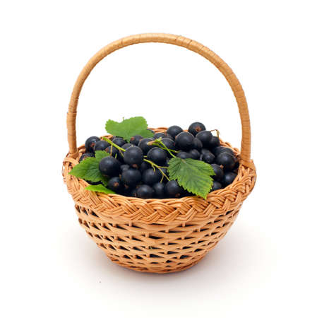 basket with black currant berries over white photo