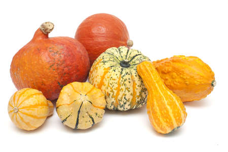 colorful set of pumpkins on white background