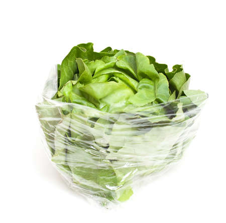 vibrat color: wrapped lettuce on white background