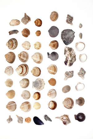 set of different sea shells Stock Photo - 15548795
