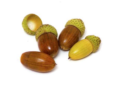 four acorns isolated on white photo