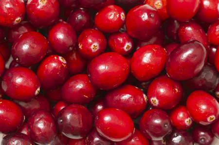 cranberries background photo
