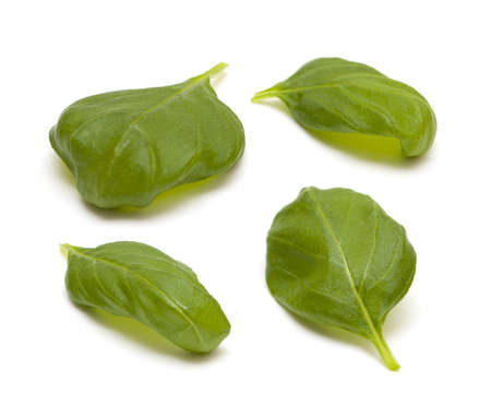 four leafs of basil isolated on white background photo