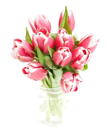 pink tulips on white backrgound photo