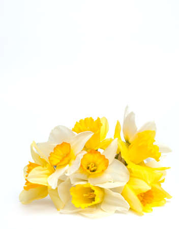 bunch of narcissus and empty space for your text photo