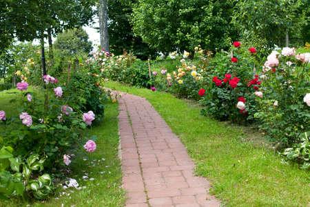garden landscape: walkaway through roses