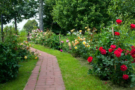 walkaway through roses photo