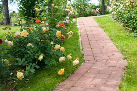 walkaway through rosas photo