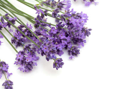 lavender flowers and empty space for your text photo