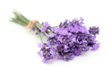 bunch of lavender isolated on white photo