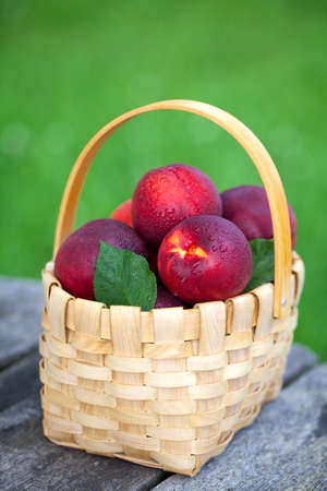 basket with nectarines on garden table photo