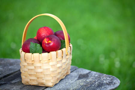 basket with nectarines on garden table Stock Photo - 14647891