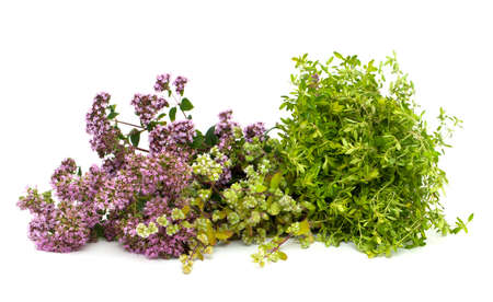 marjoram,oregano and thyme photo