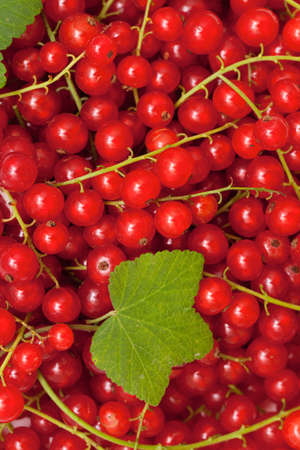 red currant close up photo
