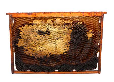 Honey comb fram isolated on white background photo