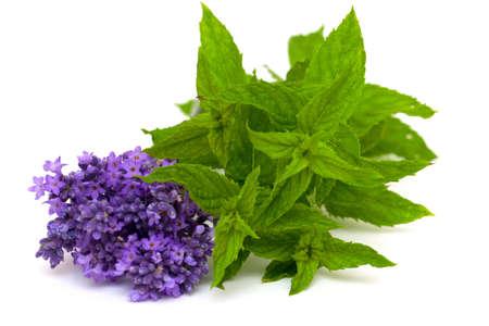 Lavendel und Pfefferminze isoliert auf weißem Hintergrund